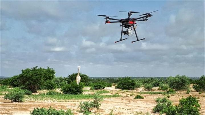 amazon drone parrot